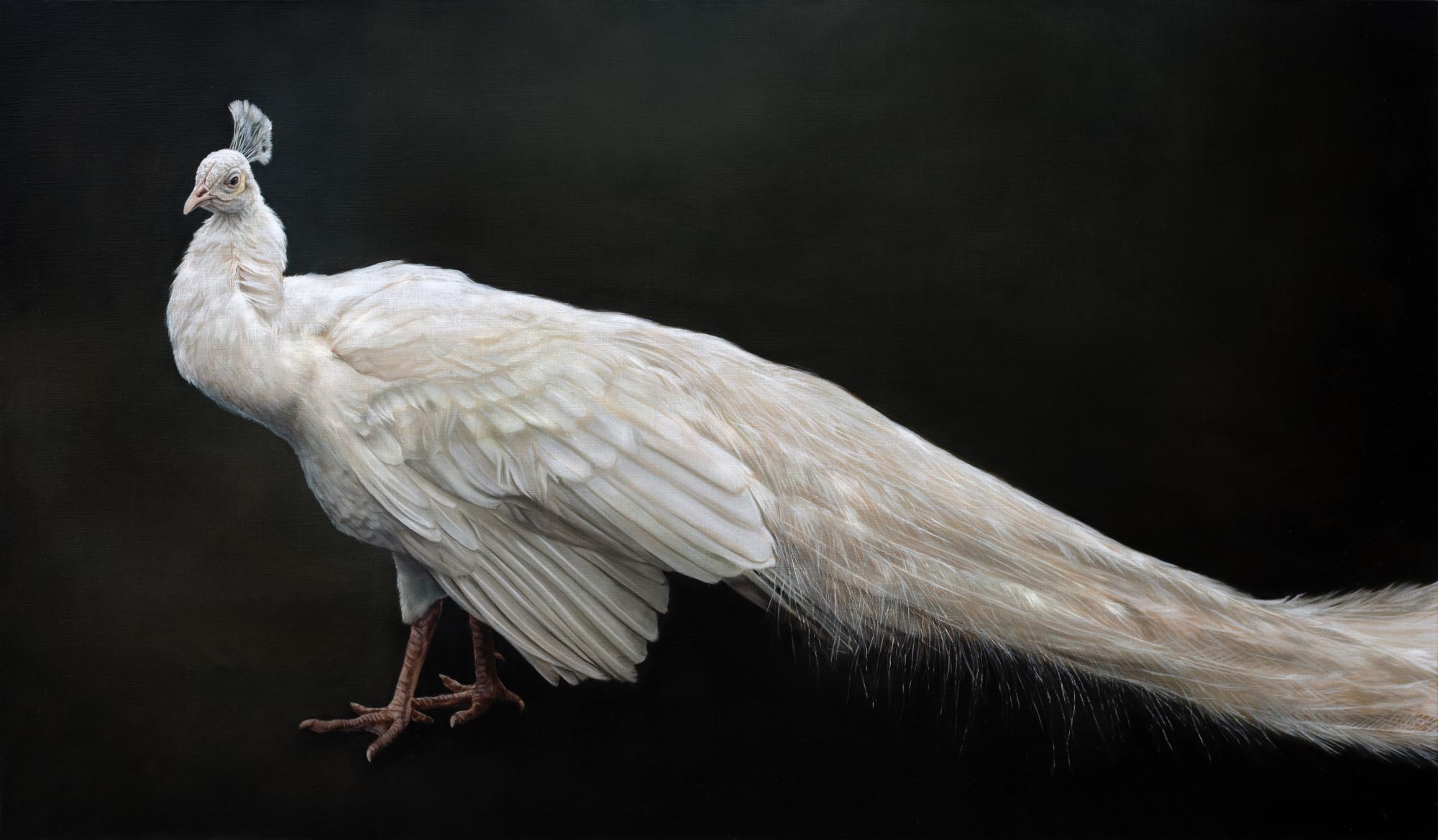 White Peacock 90 x 154 cm